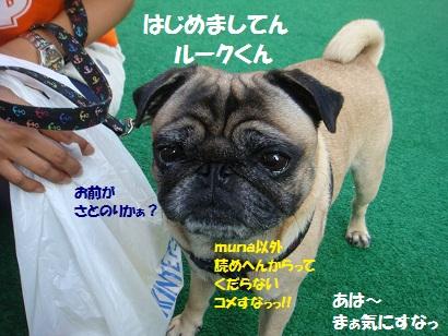 DSC01891_20150830133013875.jpg