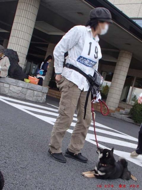 19. ヒジキ  柴犬  メス-2.jpg