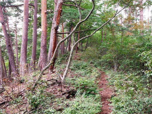 ノロシ山(長野市松代町) (24)