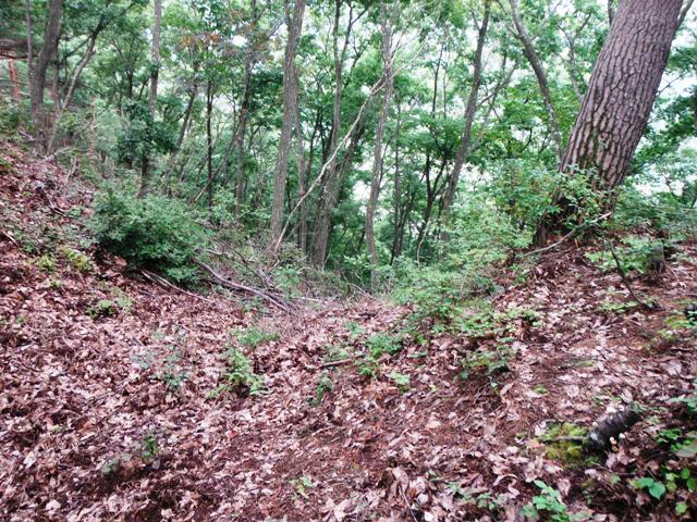 ノロシ山(長野市松代町) (77)