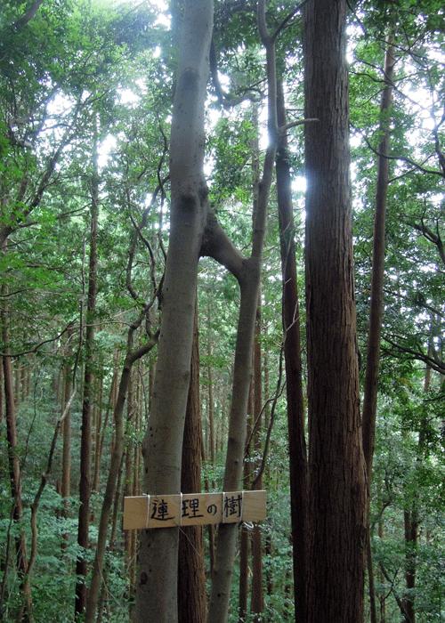 2015,9,12尺岳-13