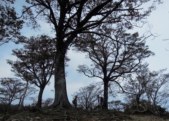 2015,10,11白髪岳-15
