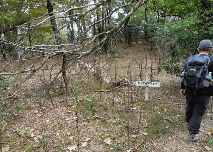 2015,10,11白髪岳-8