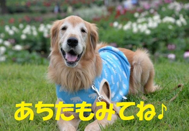DSC_1326_convert_20151002151510.jpg