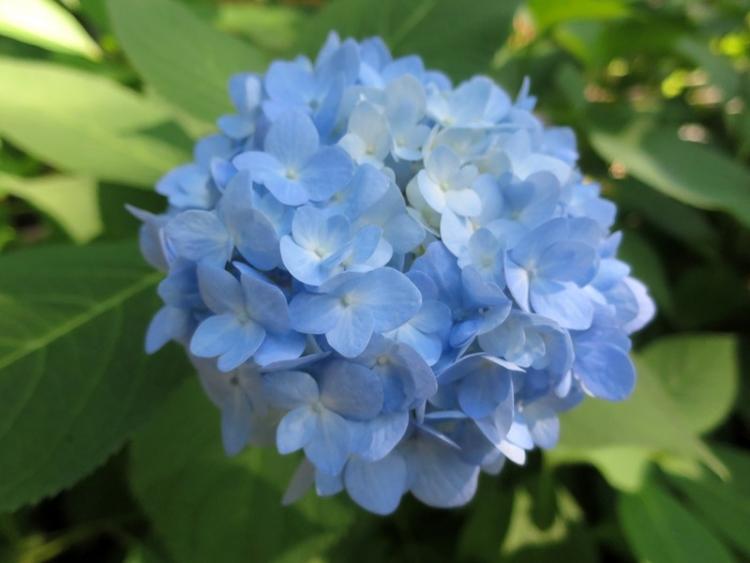 花6150917