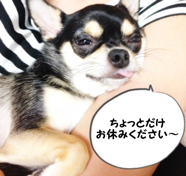2015-08-31 ちまき ブログ用