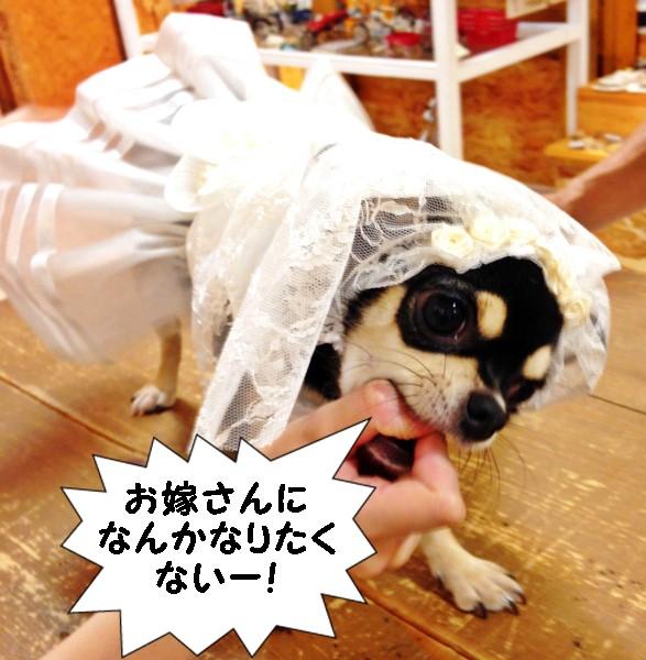 2015-09-17 ちまき 4 ブログ用