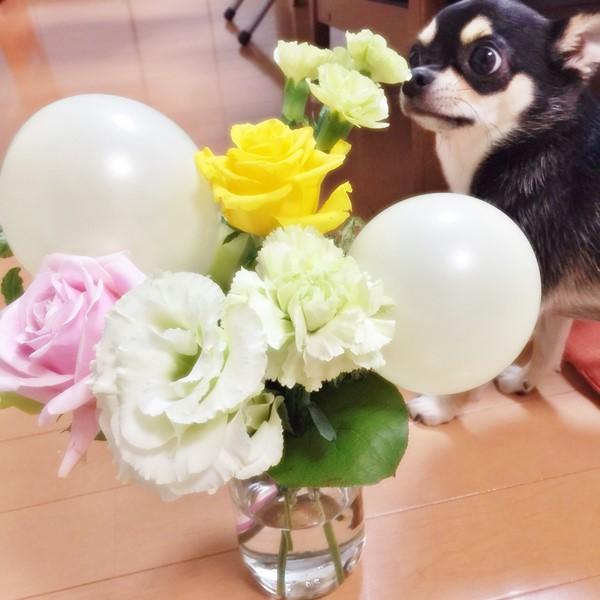 2015-09-17 ちまき 8 ブログ用