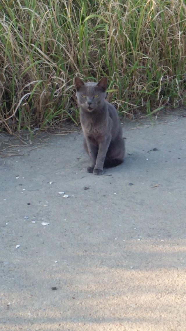20150920 外猫