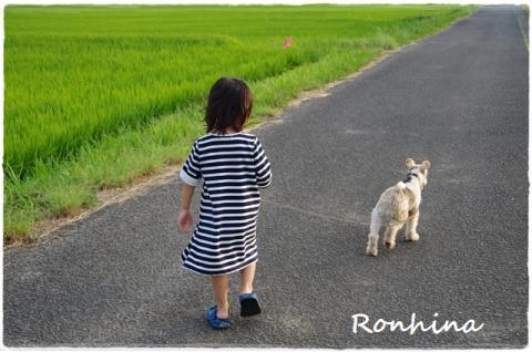 夕方の散歩⑤