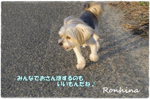 夕方の散歩③
