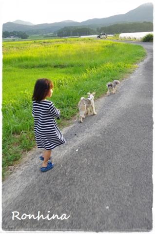 夕方の散歩①