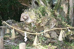 大山祇神社7