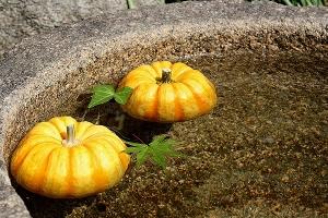 お寺のかぼちゃ2