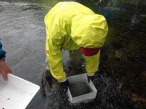 02 作業前に規定方法で水生昆虫の採捕調査