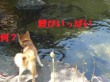 blog9717.jpg
