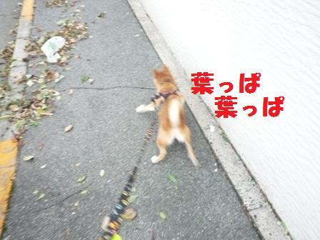 blog9727.jpg
