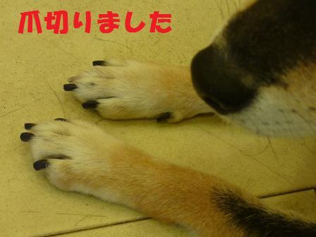 blog9790.jpg