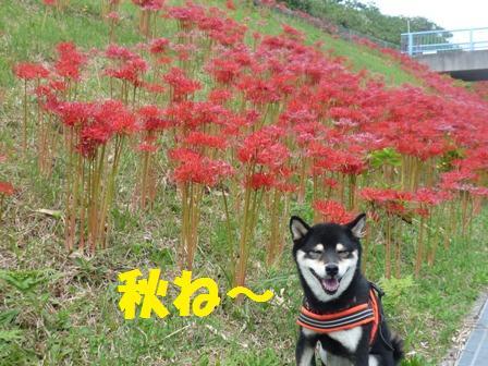 blog9825.jpg