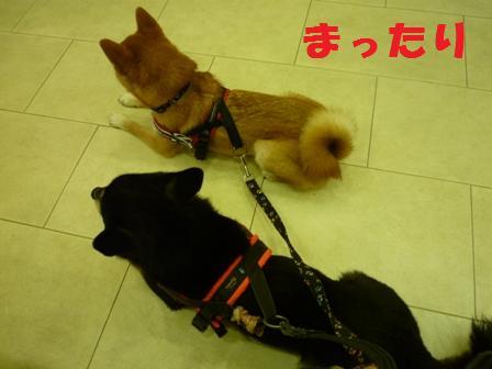 blog9832.jpg