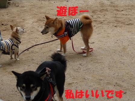 blog9875.jpg