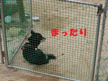 blog9879.jpg