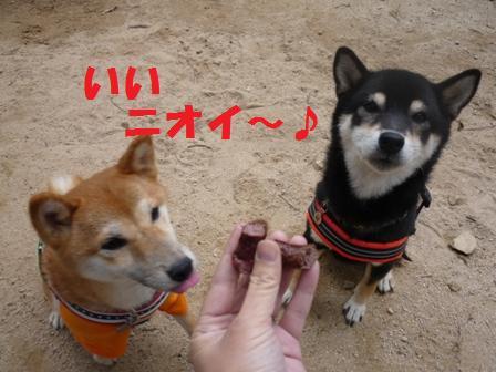 blog9885.jpg