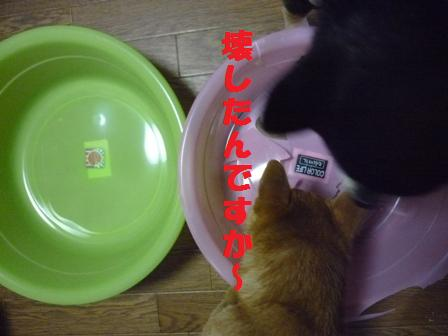 blog9920.jpg
