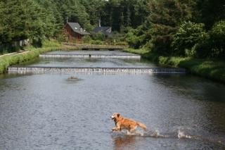 用水と犬③