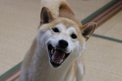 さくら笑顔