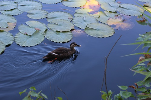 いもり池8