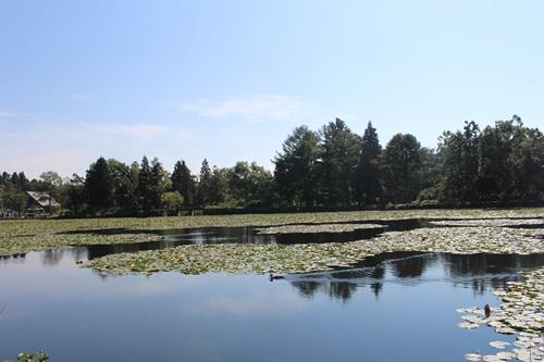 いもり池10