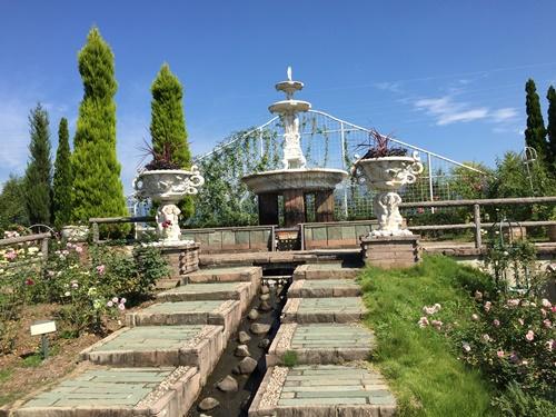 ハーブ庭園コスモス14