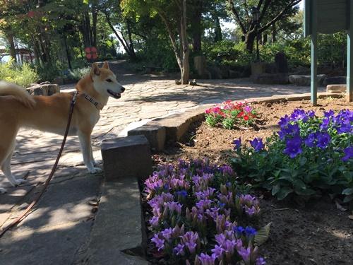 ハーブ庭園コスモス18