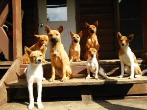 愛犬物語 七つ子