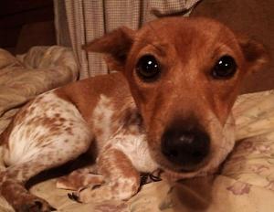 七つ子 愛犬物語 YouTuber 犬