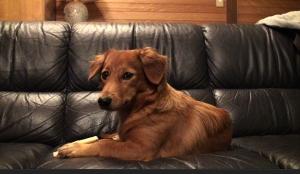 YouTuber 犬 愛犬サンバ