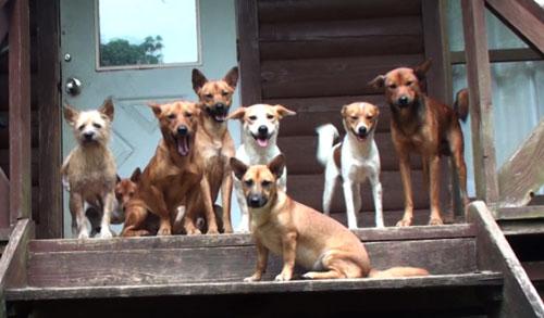 犬のしつけ 愛犬物語