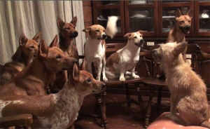 犬の終礼 愛犬物語