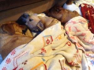 愛犬物語 サンシンとサンバ