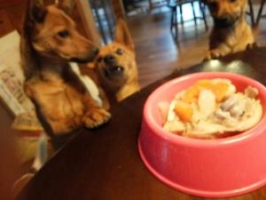 i犬の食事 愛犬物語