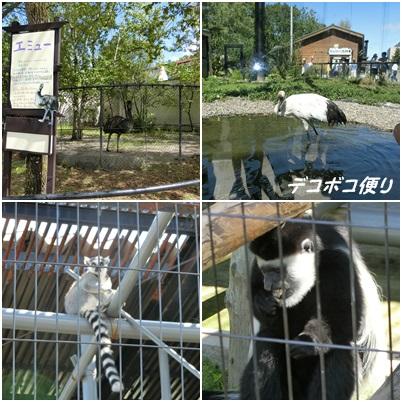 20150828 動物8