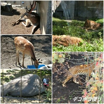 20150828 動物27