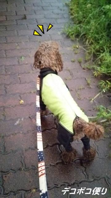 20150909 雨散歩2