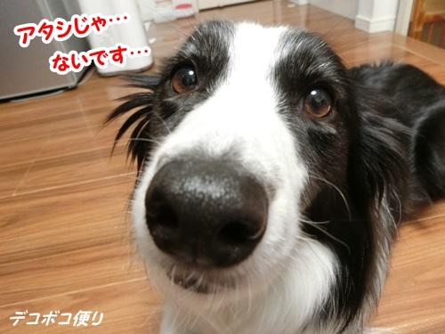 20151014 花9