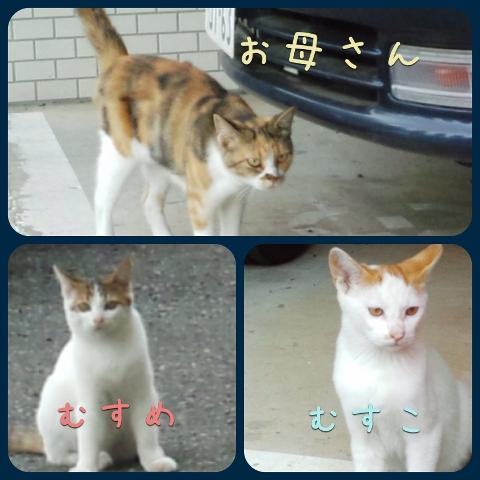梅津さんの餌やり猫_1 (480x480)