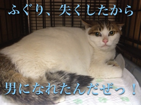 梅津さんの餌やり猫_2(480x360)