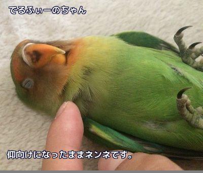 でるふぃーのベタ慣れ2