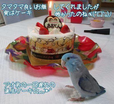 碧の誕生ケーキ2