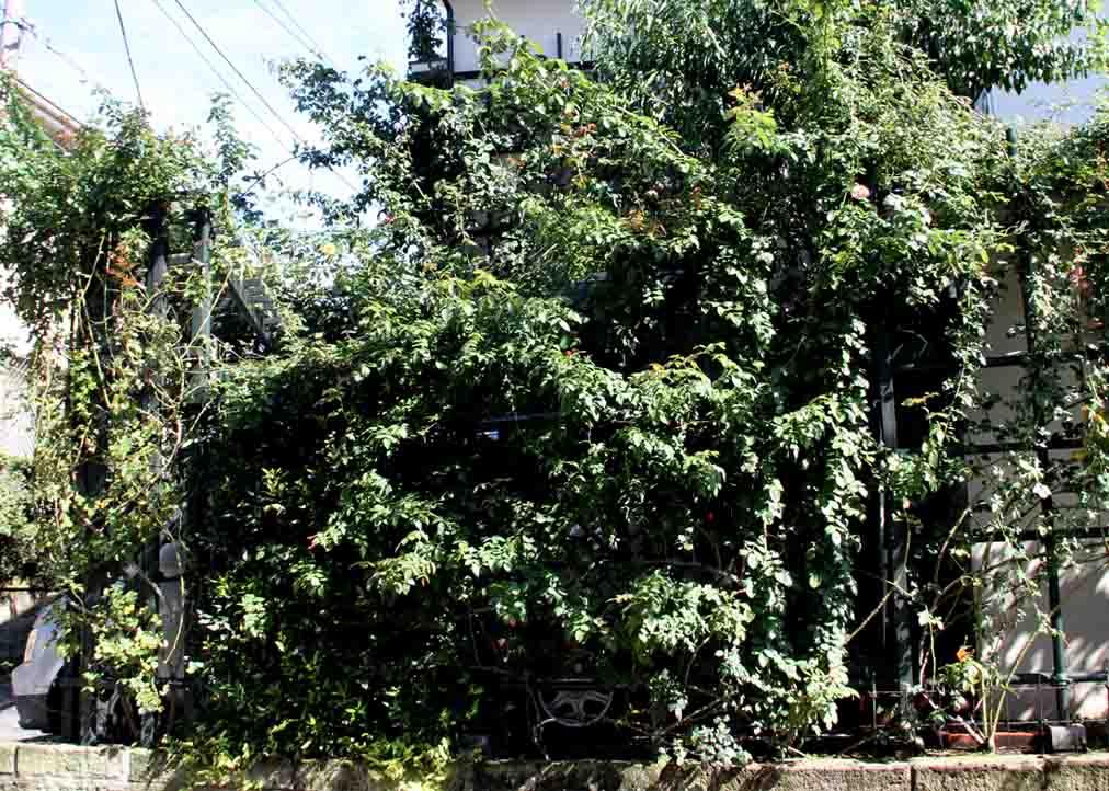 黄葉パラパラ(1)